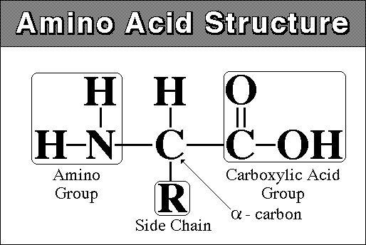 external image aminoacid.jpg
